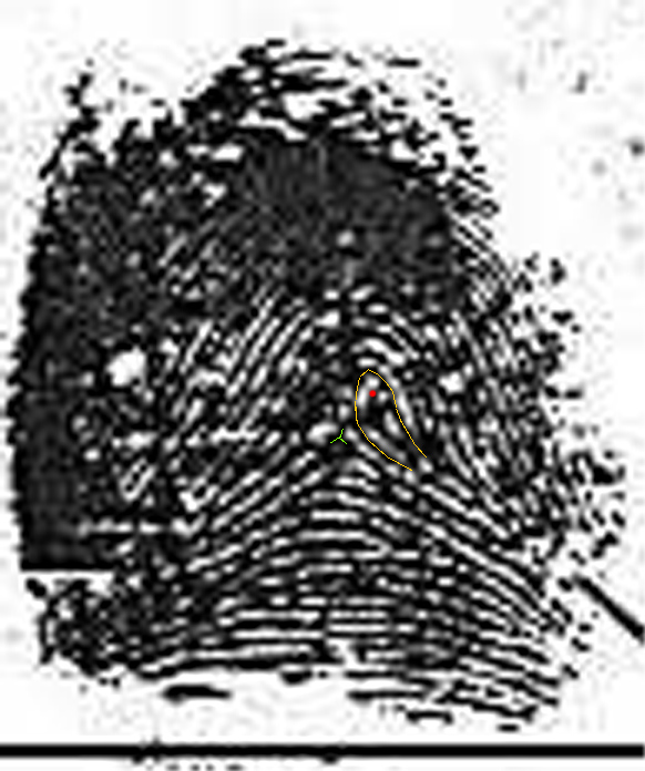 X - WALT DISNEY - One of his fingerprints shows an unusual characteristic! Walt-d20
