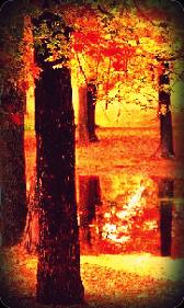 Esqueleto de Ficha. Otoao210