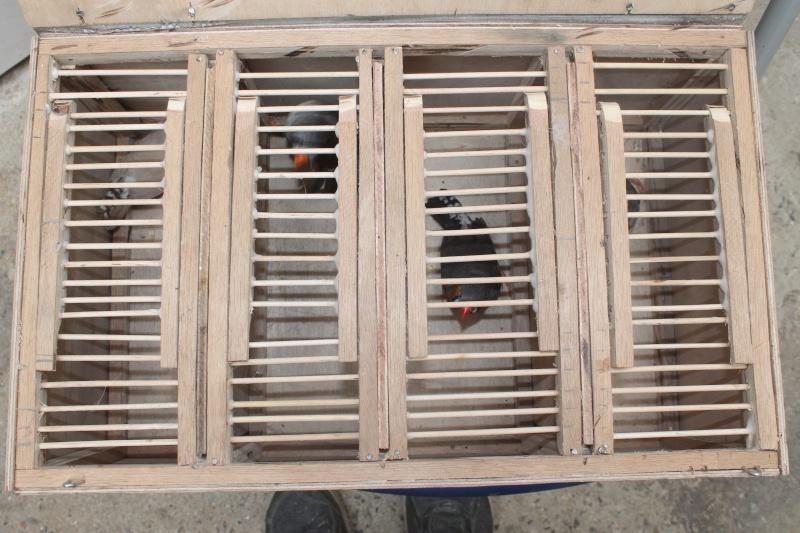 Cageot de transport fait maison Img_3021