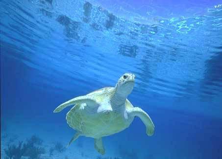 درس وعظة..!! Turtle10