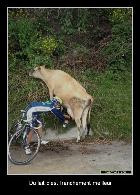 Photos comiques divers... Vache-10