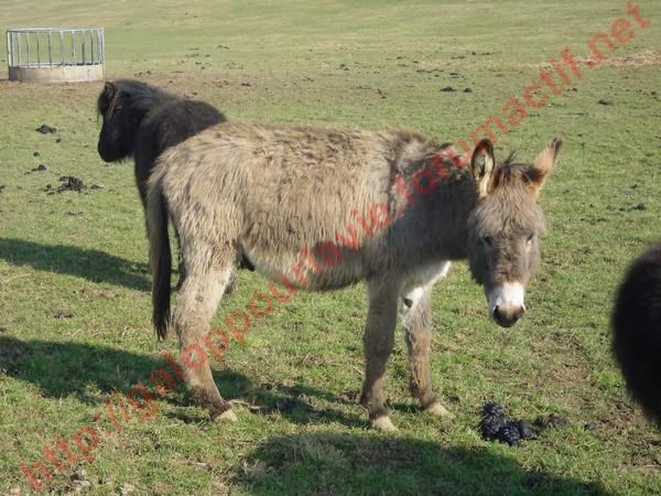 DIDOU - âne né en 2008  - adopté en mars 2011 par Comtois&co Didou_10