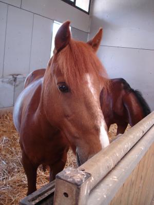 DOLLAR - OI type poney né en  1991 - adopté en juillet 2011 Dollar11