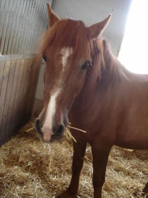 DOLLAR - OI type poney né en  1991 - adopté en juillet 2011 Dollar12