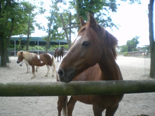 DOLLAR - OI type poney né en  1991 - adopté en juillet 2011 Dollar14