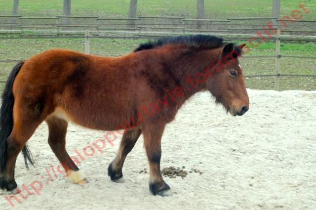 MIRABELLE - ONC Poney née en 2000 - adoptée en juin 2011 par cjean Mirabe12