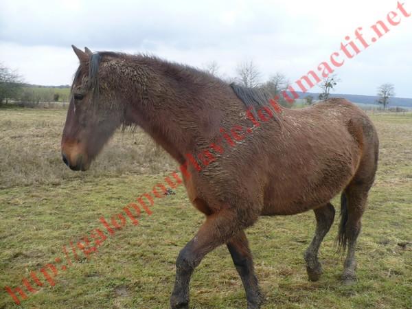 PABLO - ONC selle né en 1991 - adopté en février 2011  Pablo110
