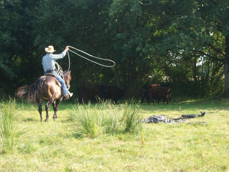 étalon quarter horse 100_9311