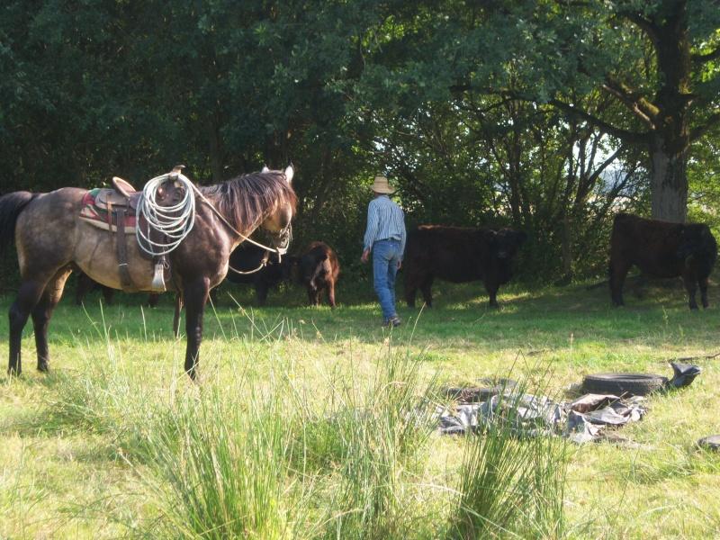 étalon quarter horse 100_9413