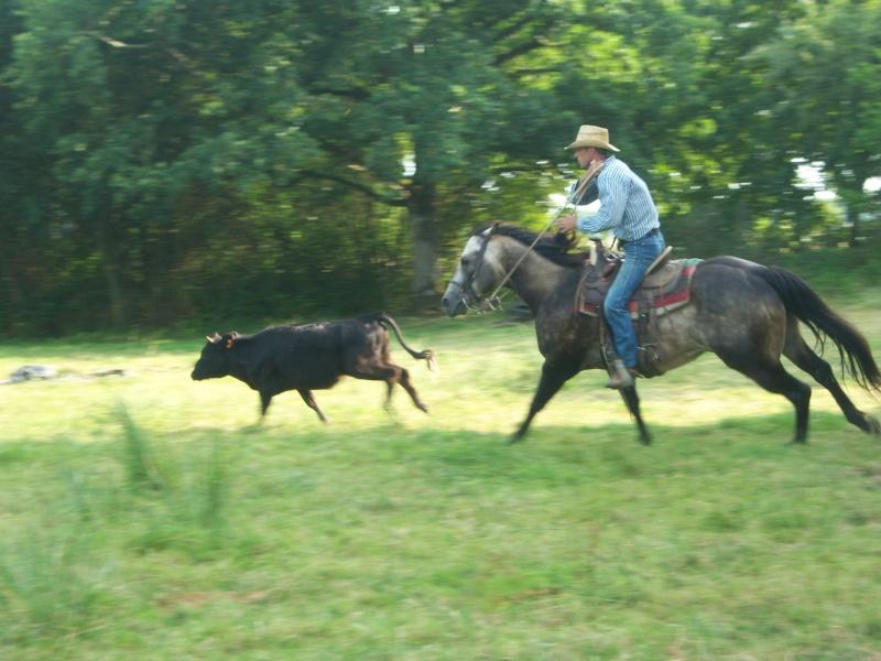 étalon quarter horse 100_9414