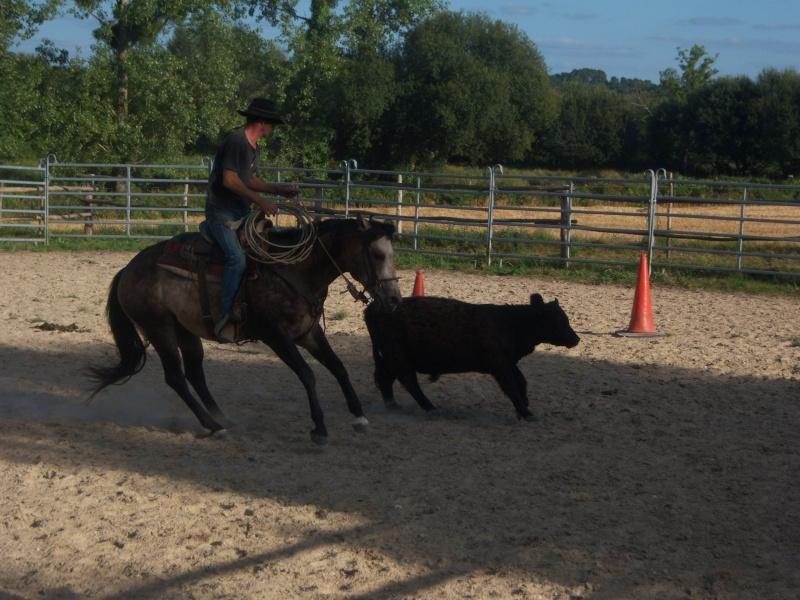 étalon quarter horse 100_9510
