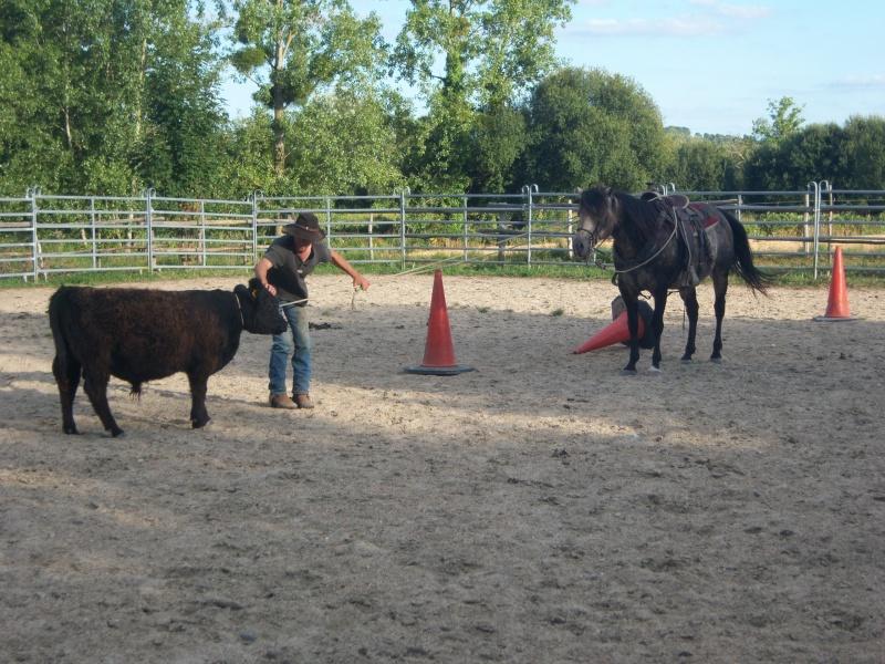 étalon quarter horse 100_9511