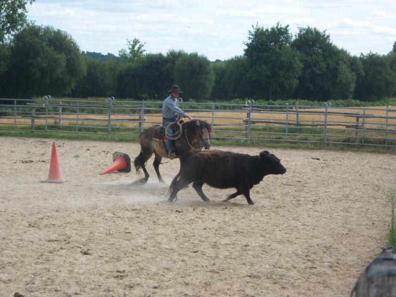 étalon quarter horse 100_9512
