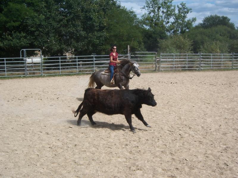 étalon quarter horse 100_9611