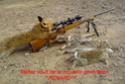 Quand les renards tirent sur les chasseurs Renard10
