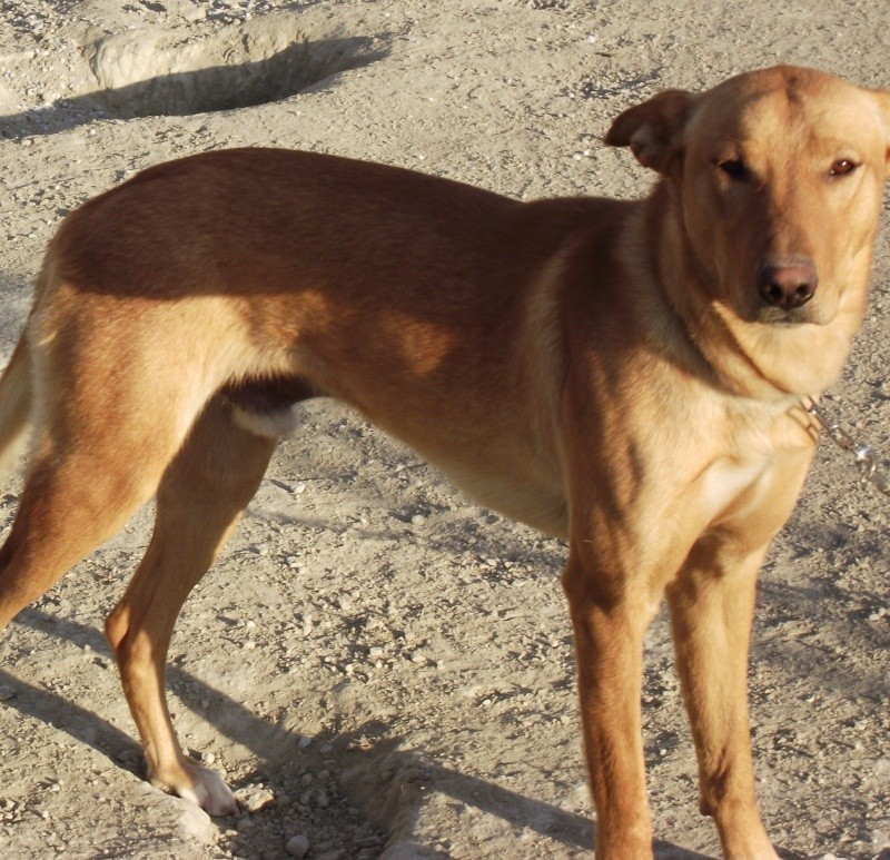 MISSING DOG Dscf4610