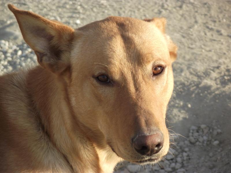 MISSING DOG Dscf4614