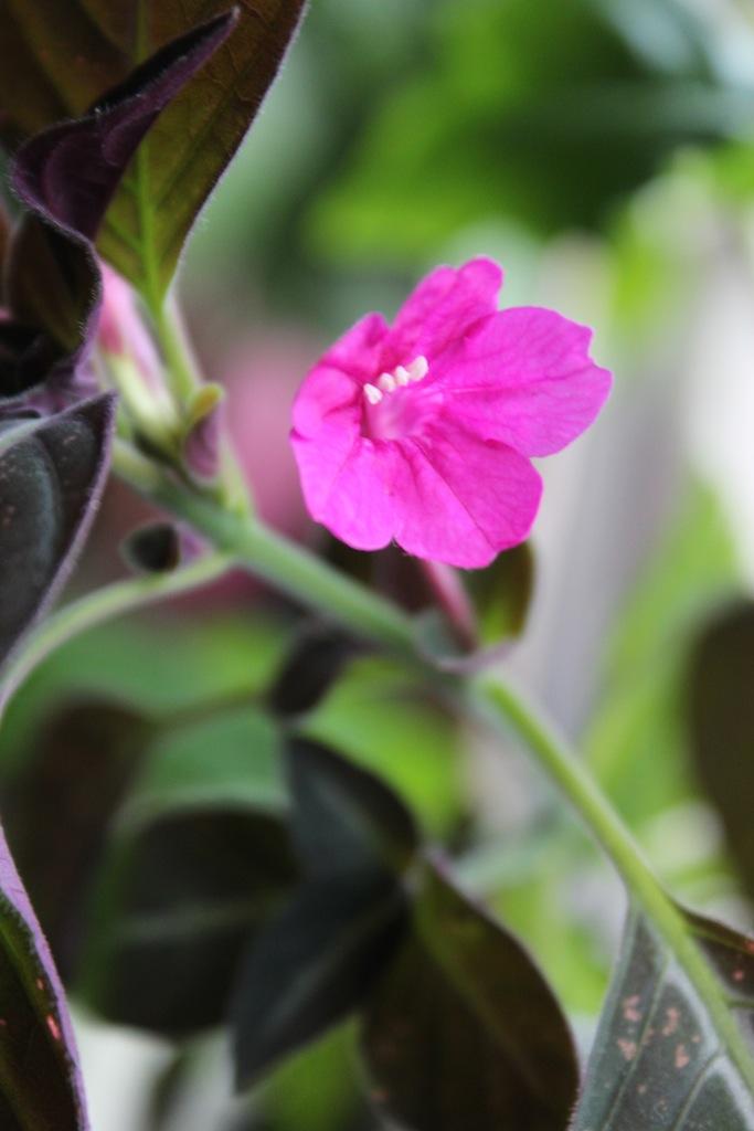 plante d'intérieur Img_3411