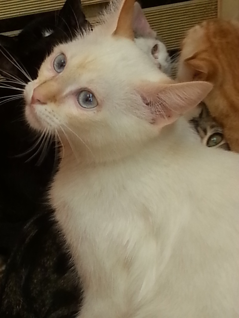 Chatons a adopter 20130812