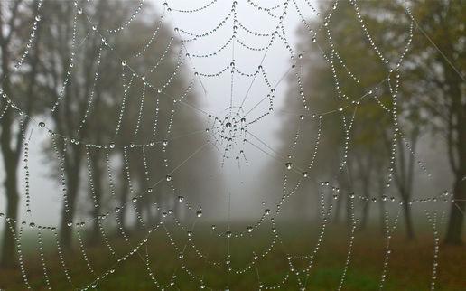 Bon Mercredi Misty-10