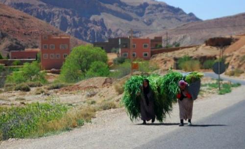 [Maroc/Histoire, Accueil...] Des curiosités, humaines, Animales, plantes  01_dam10
