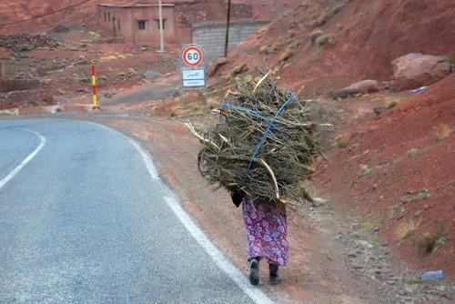 [Maroc/Histoire, Accueil...] Des curiosités, humaines, Animales, plantes  01_dam11