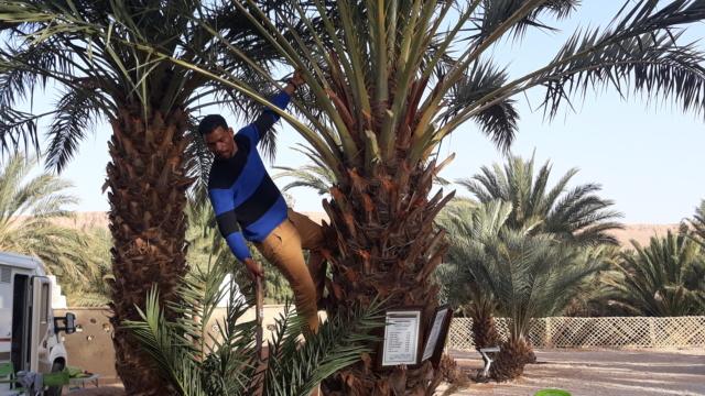 [Maroc Camp/Dernières nouvelles] Camping Hakkou Aufous 20190201