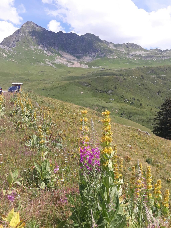[Autres voyages/France] Séjour en Haute Savoie - Page 2 20200745