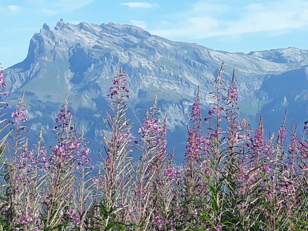 [Autres voyages/France] Séjour en Haute Savoie - Page 3 20200832