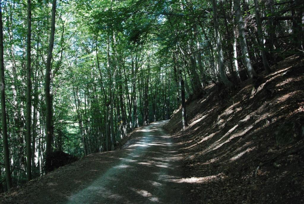 [Autres voyages/France] En route pour le Champsaur Dsc_8923