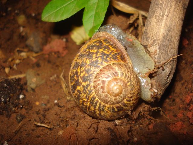 Lutte contre les escargots et les limaces Escarg12