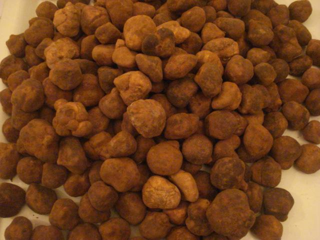 Les truffes du Sahara Truffe11