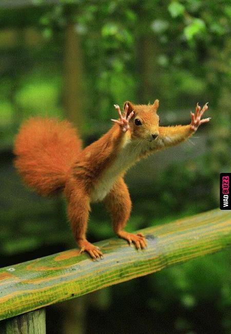 Présentation de LadySquirrel - Page 4 16547010