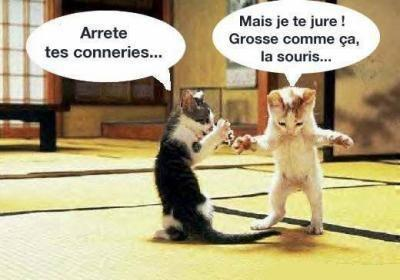 chat ...chat ...chat ... - Page 8 1_a0_418