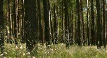 Wald & Umgebung