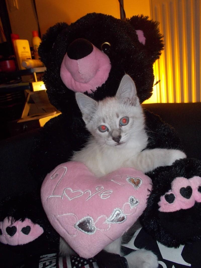 Kitty a la maison depuis 4jours Dscn0111