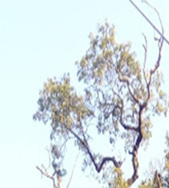 Jeux Identification d'arbre(s) 3° Image110