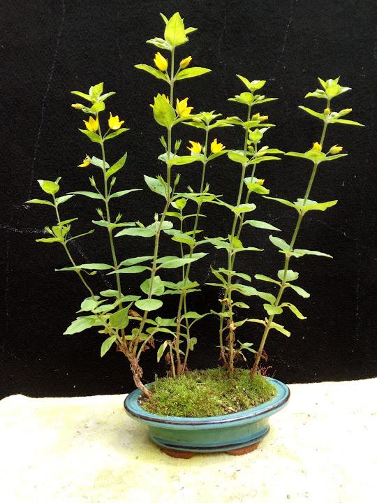 Les plantes d'accompagnement de MB Img_2012