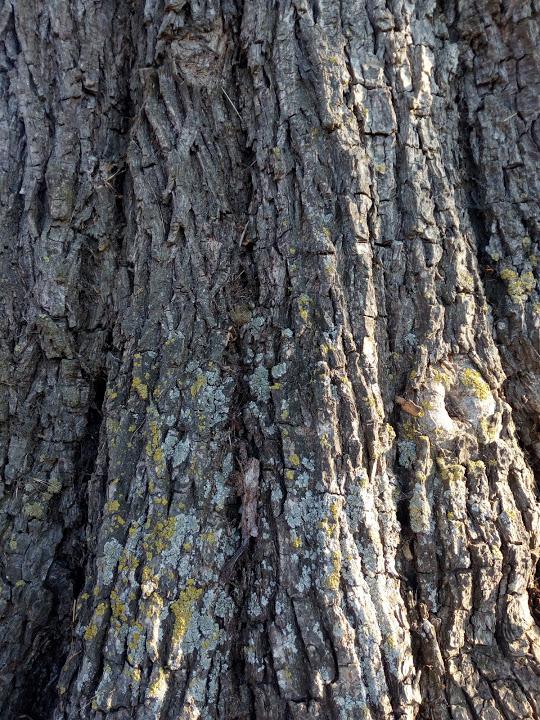 Jeux Identification d'arbre(s) 3° Img_2045