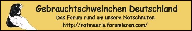 Notschweinchen-Forum