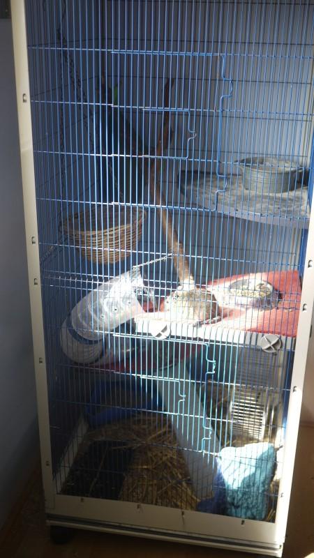 3 cages à vendre !! [69] P1060110