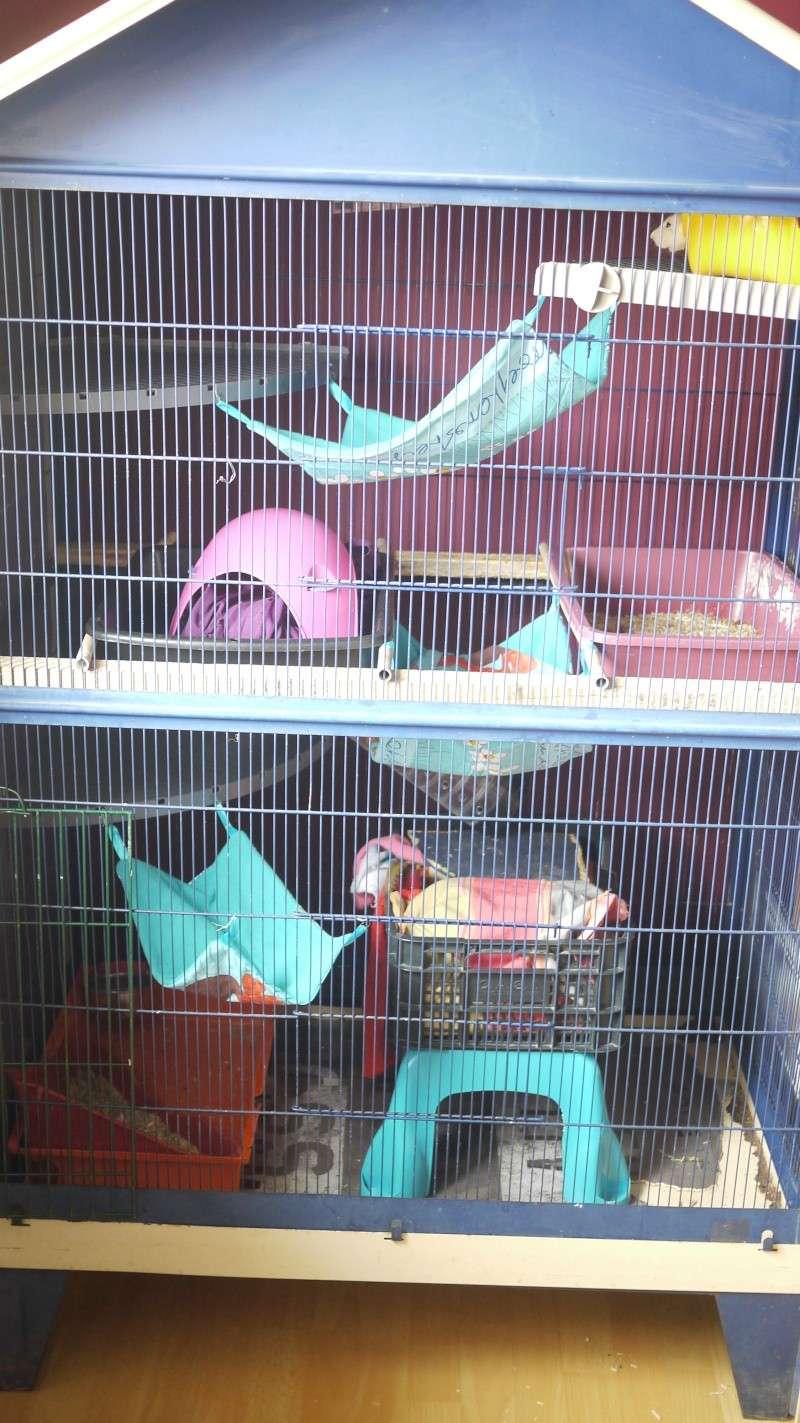 3 cages à vendre !! [69] P1070326