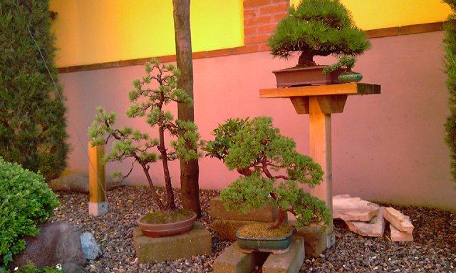 Dove coltiviamo i nostri bonsai - Pagina 2 1011