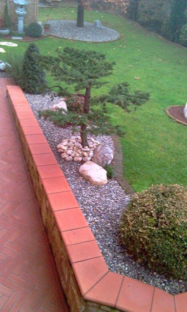 Dove coltiviamo i nostri bonsai - Pagina 2 1111