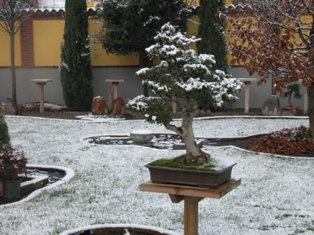 Dove coltiviamo i nostri bonsai - Pagina 2 511