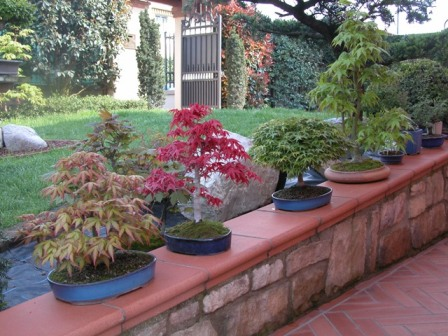 Dove coltiviamo i nostri bonsai - Pagina 2 611