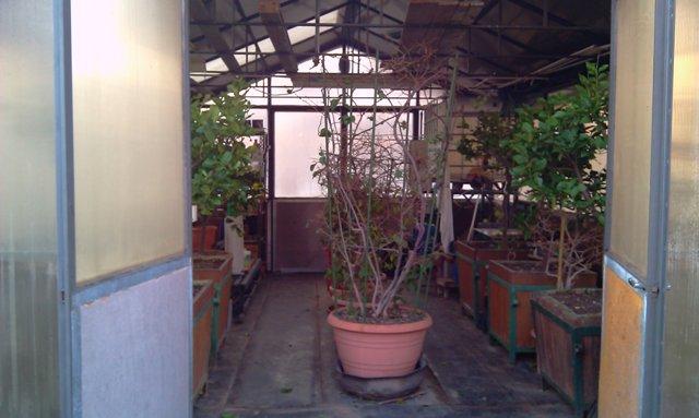 Dove coltiviamo i nostri bonsai - Pagina 2 Intern10