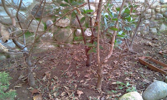 Dove coltiviamo i nostri bonsai - Pagina 2 Piante10