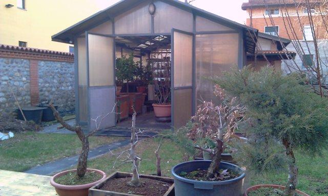 Dove coltiviamo i nostri bonsai - Pagina 2 Serra_11