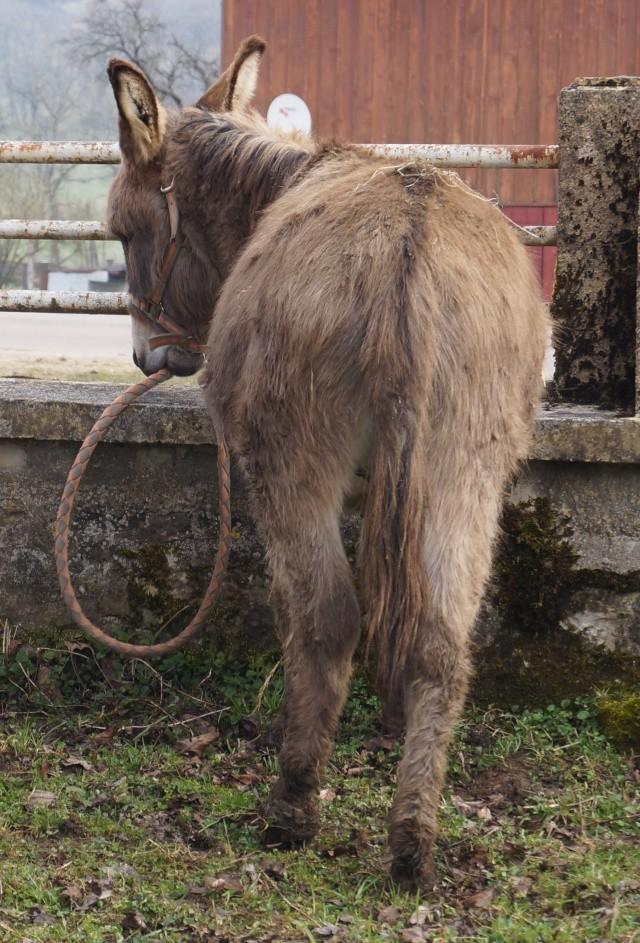 DIDOU - âne né en 2008  - adopté en mars 2011 par Comtois&co - Page 3 Dsc00714
